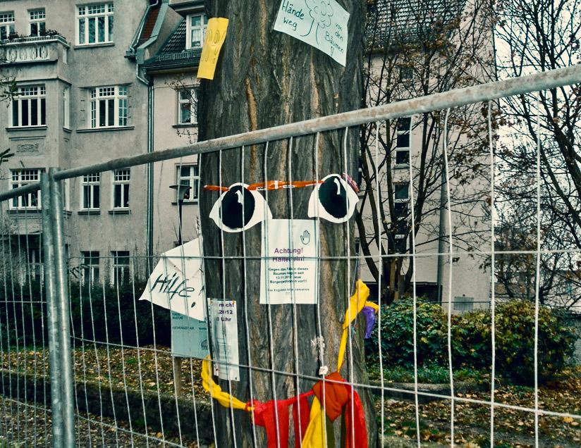 Baufilz gegen Bäume am Preßlersberg in Halle - hallesche störung