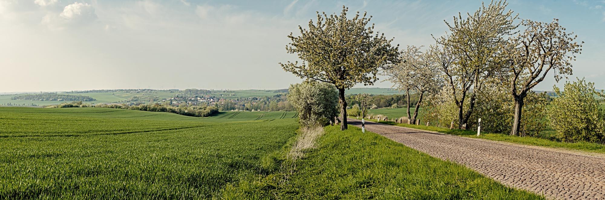 Blick-auf-Brachwitz-Streifinger