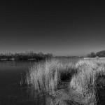 Der Hufeisensee - ein bedrohter Naturraum