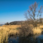 Nachdenken über den Hufeisensee