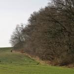 Dreikönigstag in der Dölauer Heide