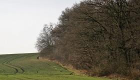 Lintbusch/Dölauer Heide