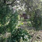 Solidarische Landwirtschaft- das erste Projekt inHalle