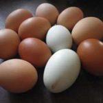 Hühner-ABC: Über die Persönlichkeit des Tieres,  das uns das tägliche Ei beschert