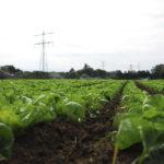 Umweltwissenschaftler: EU-Maßnahmen gegen Artenschwund kaum wirksam