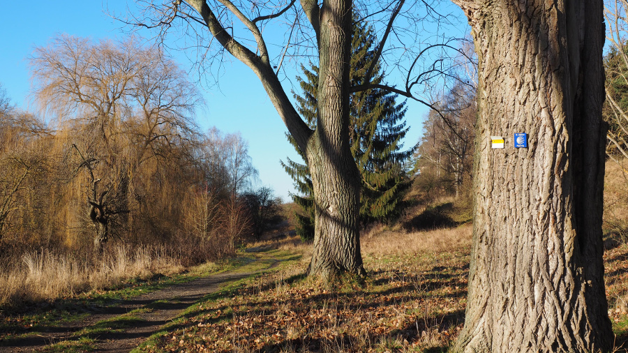 Im Südharz könnte ein Biosphärenreservat der UNESCO entstehen