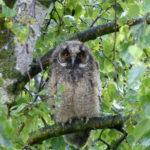 Schlaflos in Kröllwitz - was sich im Gartengeäst abspielt ist eine kleine Sensation