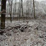 Öffnung der Saale-Nebenarme gefährdet WildeSaale