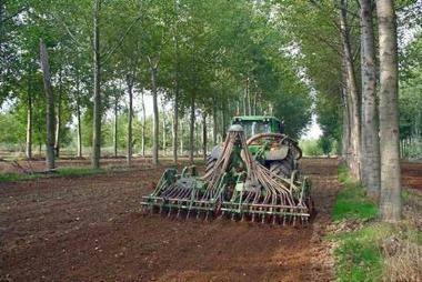 Kombination von Ackerbau und Gehölzzucht schützt Boden und Klimahaftung von
