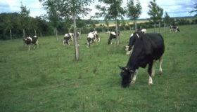 KOmbination von Weide und Gehölzstreifen