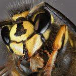 Wildbienenschutz strukturell vernachlässigt