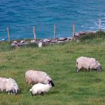 Irland - Grüne Insel oder purer kapitalistischer Landausverkauf?