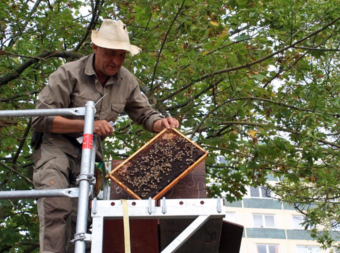 Blick ins Bienenhaus der BeGees in neutopia, im Hintergrund Elfgeschosser im Begonienweg