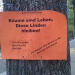 Umweltinitiativen fordern Erhalt der Bäume am Riveufer