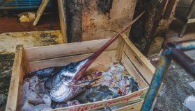 Durch Überfischung von Jungtieren sidn die Schwertfischbestände im Mittelmeer in Gefahr
