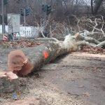 BUND kritisiert Baumfällungen in der Heideallee