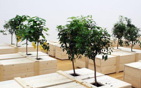 """""""Ex It"""" von Yoko Ono: mediterrane Gewächse wachsen aus Holzsärgen"""