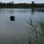 Wasserprobleme am Hufeisensee