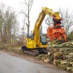 Baumfällungen am Gimritzer Damm: Umweltschützer fordern sofortigen Stopp