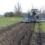 Ackerbau zwischen Baumstreifen: AbL setzt Pionierarbeit für Agroforstsysteme in Sachsen-Anhalt fort